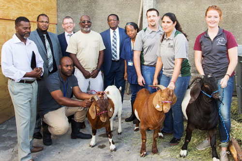 Ross Vet Small Ruminant Student Club and goats